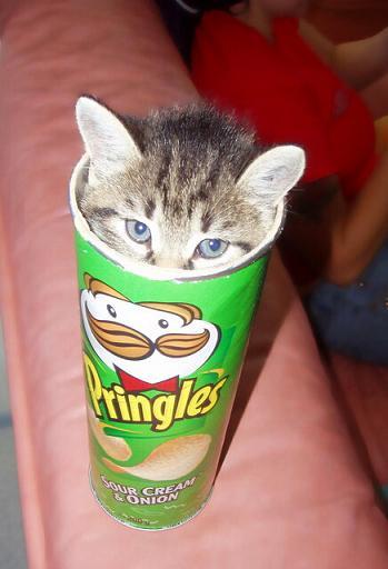 プリングルス猫