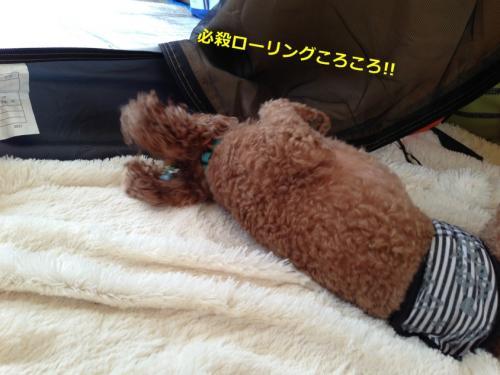s_写真 2013-09-14 15 27 01