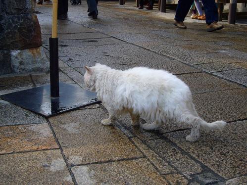 おかげ横丁_野良猫