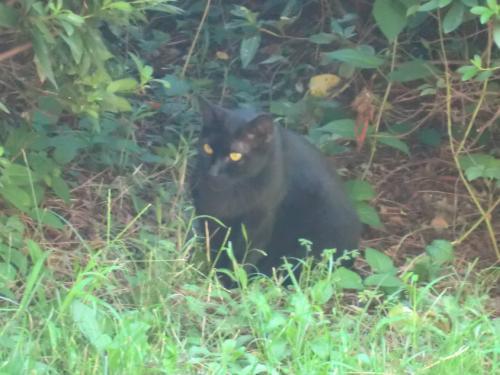 名城公園_黒猫