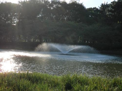 名城公園_噴水