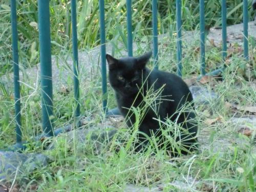 名城公園_黒猫2