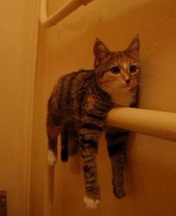 バスタオル猫