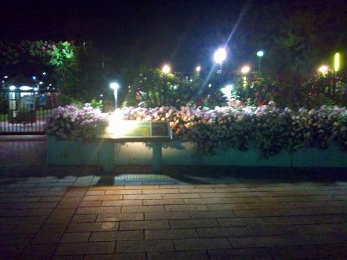浜寺公園_ばら園