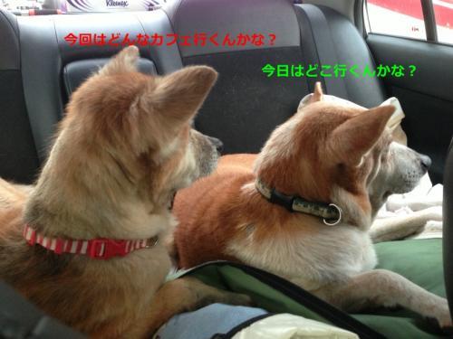 s_写真 2013-09-14 6 57 09