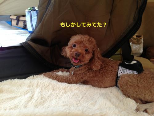 s_写真 2013-09-14 15 27 04