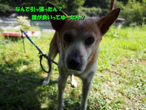 s_P9220234.jpg