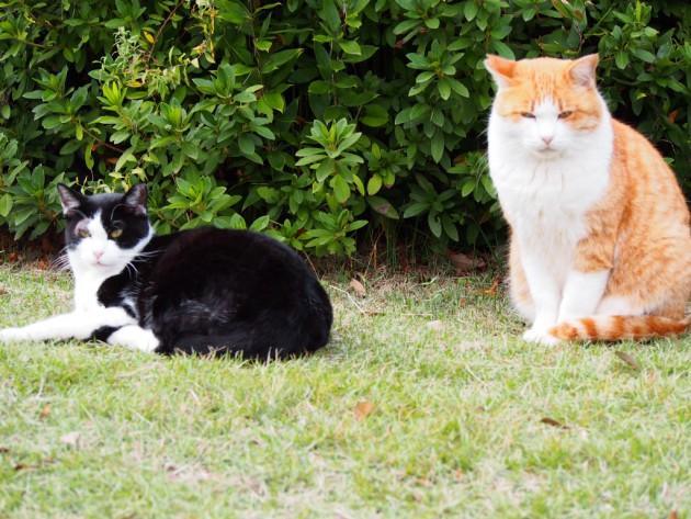 大泉緑地の人懐こい猫