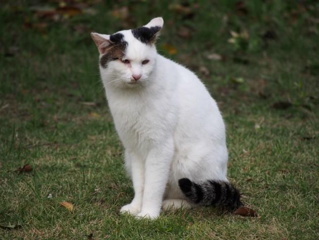 大泉緑地のぶちゃ猫
