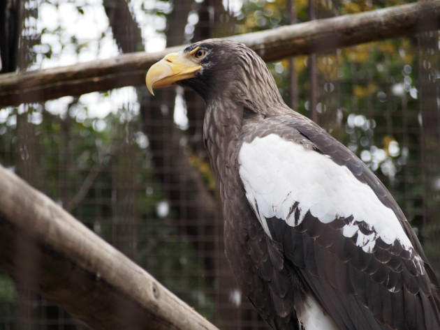 上野動物園_猛禽類3