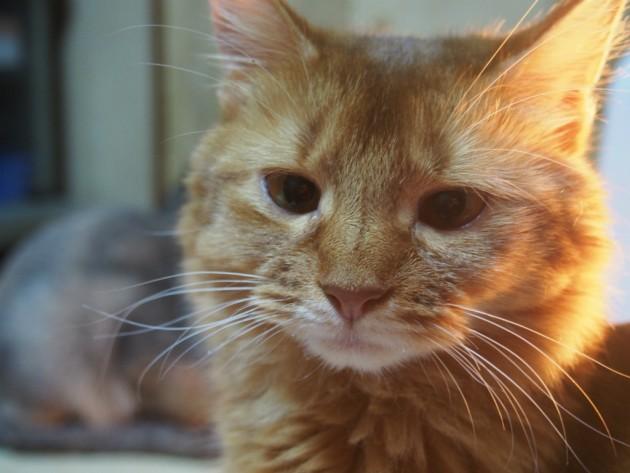 美人猫ゆず