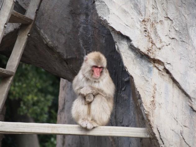 上野動物園_猿2