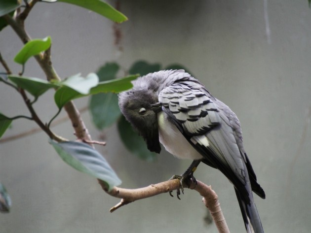 上野動物園_なんかの鳥