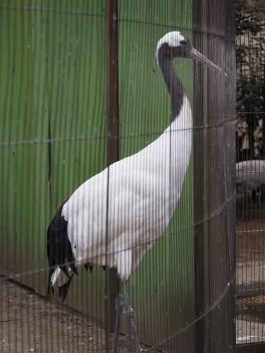 上野動物園_つる