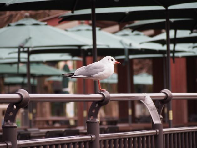 上野動物園_カッコいい鳥