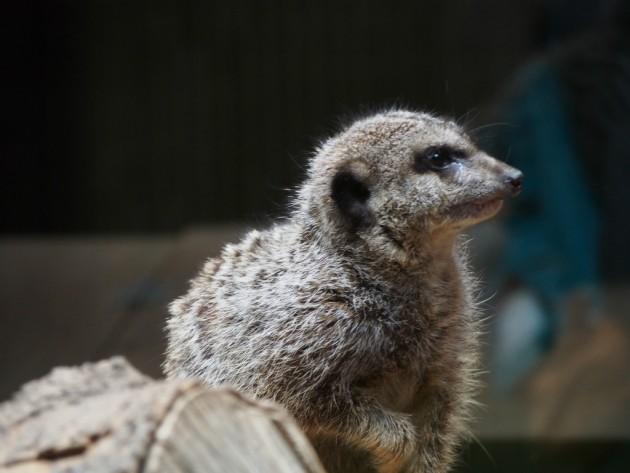上野動物園_何かの小動物