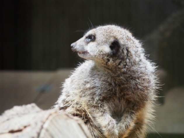 上野動物園_何かの小動物2
