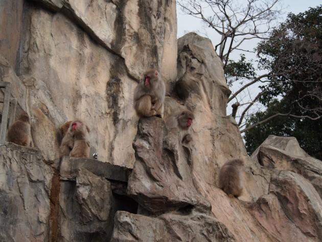 上野動物園_猿3