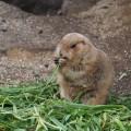 真冬の寒い中上野動物園でパンダを見てきた【後編】