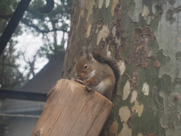 上野動物園_リス2